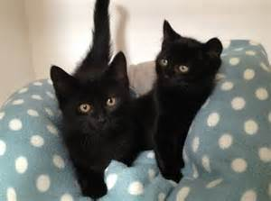 black cats for happy black cat appreciation day why cats rule the world