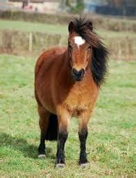 Combien De Chevaux : combien de livre le shetland est capable de supporter races de chevaux ~ Medecine-chirurgie-esthetiques.com Avis de Voitures