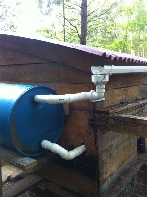 fresh quail eggs gh homestead animals poulailler