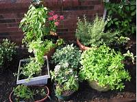 potted herb garden How to Plant an Outdoor Potted Herb Garden