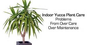 Yucca Plant Diseases