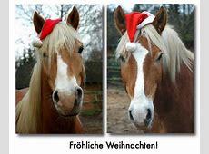 Wege zum Pferd » Blog Archiv » Weihnachtsgrüße von den Hafis