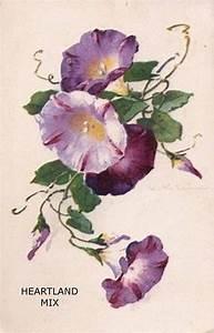 3 X 3 Note Cards Antique Vintage Floral Morning Glory Digital Image