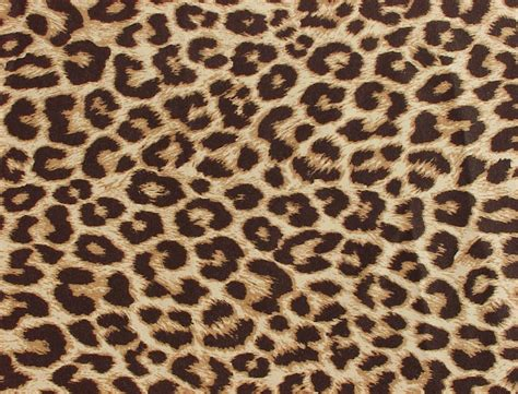 Leopard Animal Print Wallpaper - wallpaper wallpaper animal print