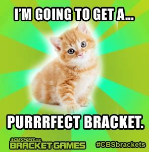 Purrrfect Meme - memes to get and game on pinterest