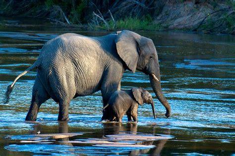 spectacular wildlife    national