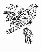 Robin Coloring Bird Couples sketch template