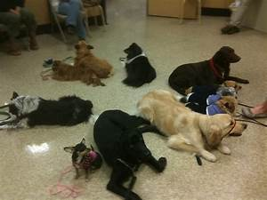 advanced dog training class petsmart office photo With advanced dog training