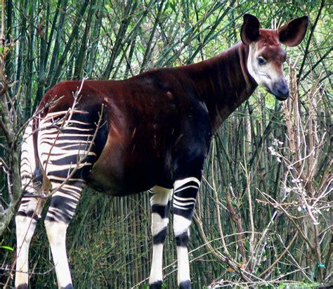 animals wikipedia