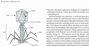 T4 Bacteriophage Structure Diagram  2