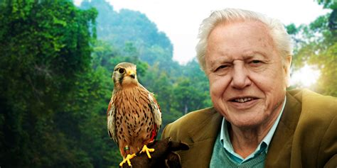David Attenborough Themed Raves Are A Thing & We Must Go