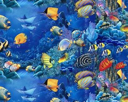 Fishes Wallpapers