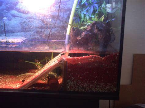 vos aquarium eau chaude ou froide poissons ou tortue plein de photo