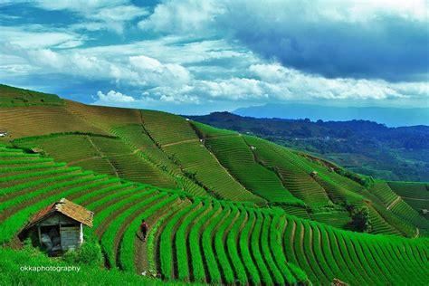 destinasi wisata terasering cantik  indonesia undakan