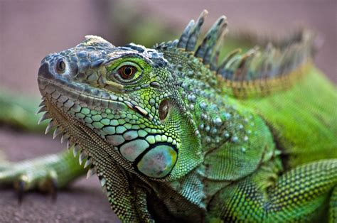 Keeping Exotic Pets Cool in the Summer Heat