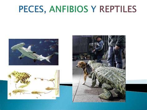 peces anfibios  reptiles