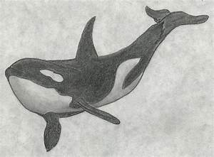 Orca by Lursa on DeviantArt