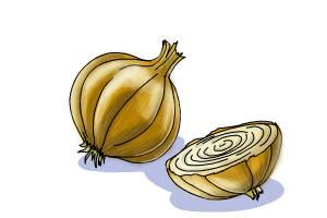 draw onion step  step drawing lessons drawingnow