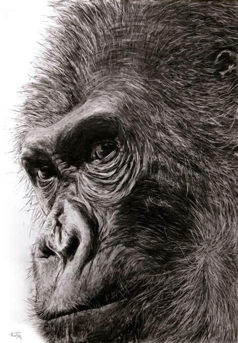 animals charcoal drawing  fabian froehly  behance