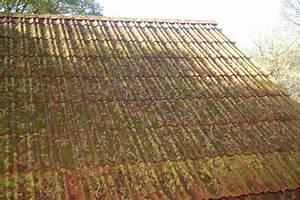 Moos Auf Dem Dach : achter geburtstag unseres gartenhauses wir sind im garten ~ Watch28wear.com Haus und Dekorationen