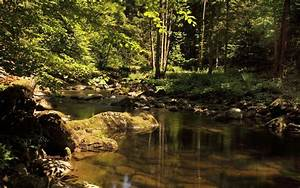 Beautiful, Water, In, Forest, Area, Nature, Wallpaper, 2560x1600