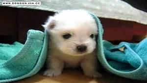 Cutest Little Puppies - World's Most Cute Puppy Dogs ...