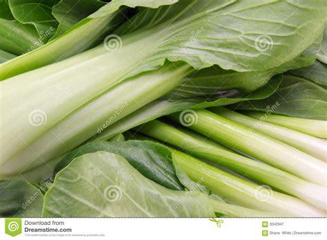 bos cuisine aziatische groenten stock afbeelding afbeelding bestaande