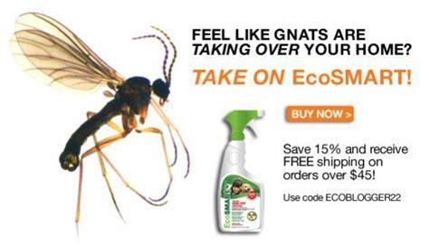 Small gnats   DoItYourself.com Community Forums