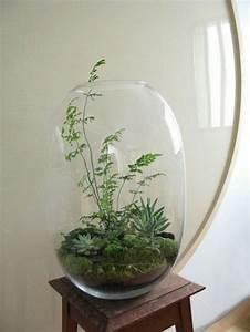 Grand Pot Plante : grand bocal en verre avec des plantes grasses jardins d ~ Premium-room.com Idées de Décoration