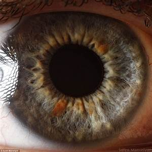 The Eyes Have It  The Iris Pictured In Remarkable Detail