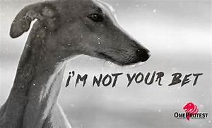greyhound track protest jacksonville