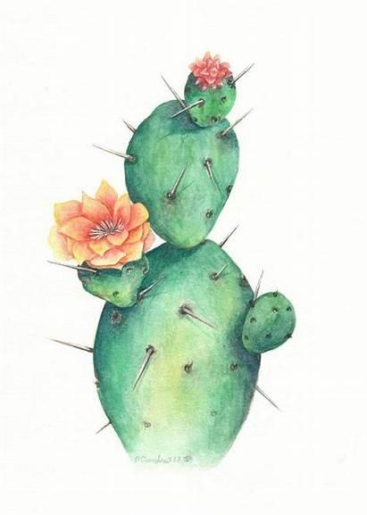 Cactus Watercolor Drawing Single Painting Kaktus Dibujo
