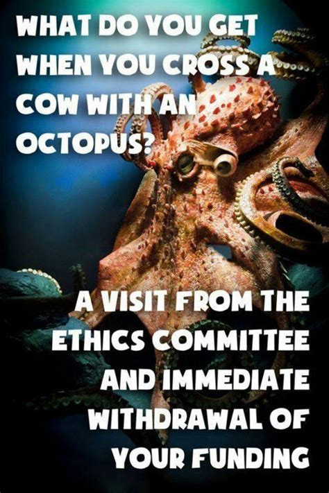 octopus memes memedroid