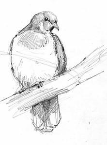 5 Steps To Better Bird Drawing  U2013 Drawing The Motmot