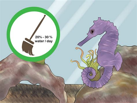 seahorse care wikihow