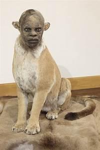 Kate Clark Sculpts Realistic Animal