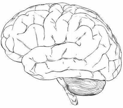 Brain Human Sounds Waves Step