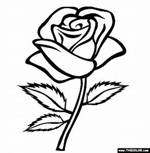 Rose Colour by xxbrighidxx on DeviantArt