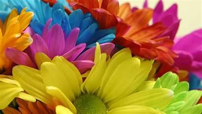 Colorful Flowers Desktop Wallpapers 4k