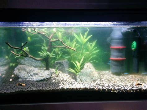 bureau avec tr騁eau probleme eau verte aquarium 28 images cyano dans mon bac les plantes et algues eau douce aqua st 233 rilisateur uv utilisation en aquarium d
