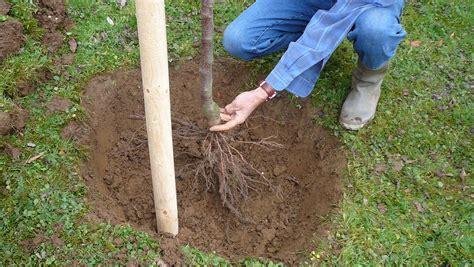 baum loch im stamm einen baum pflanzen in sechs schritten das