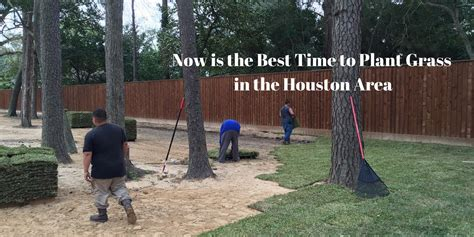 grass houston sod augustine st area raleigh south why pick missouri