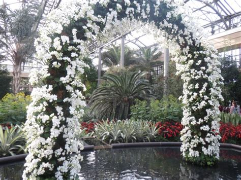 longwood gardens orchid show garden ftempo