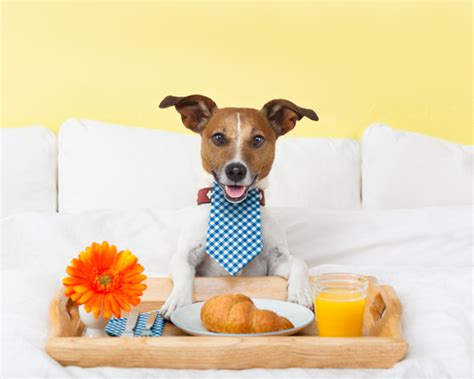 pet care away from home pros and cons of dog friendly