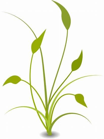 Nature Clip Clipart Pretty Floral Downloads Background