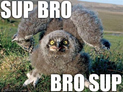 Sup Meme - sup meme 28 images sup cat sup bro cat quickmeme sup boo tobuscus badass memes quickmeme