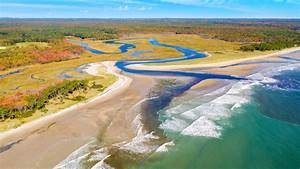 Scientists, Say, Estuary