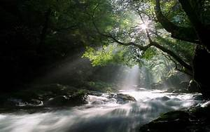 Rays, Of, The, Sun, Over, The, River, In, The, Forest, Wallpapers, And, Images
