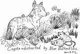Trapper Template Coyote sketch template
