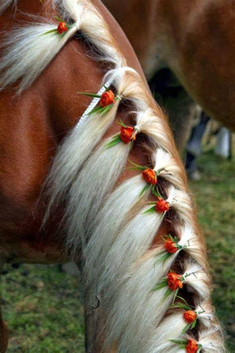 cool hairstyles  horses xcitefunnet